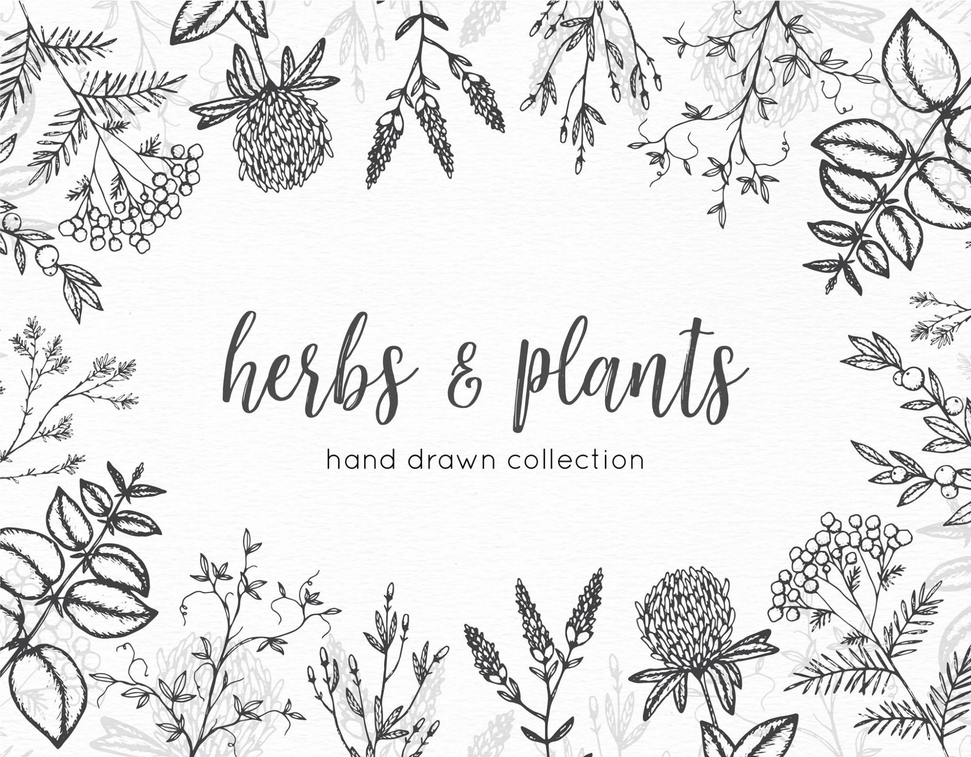 Herbs Vector Graphics