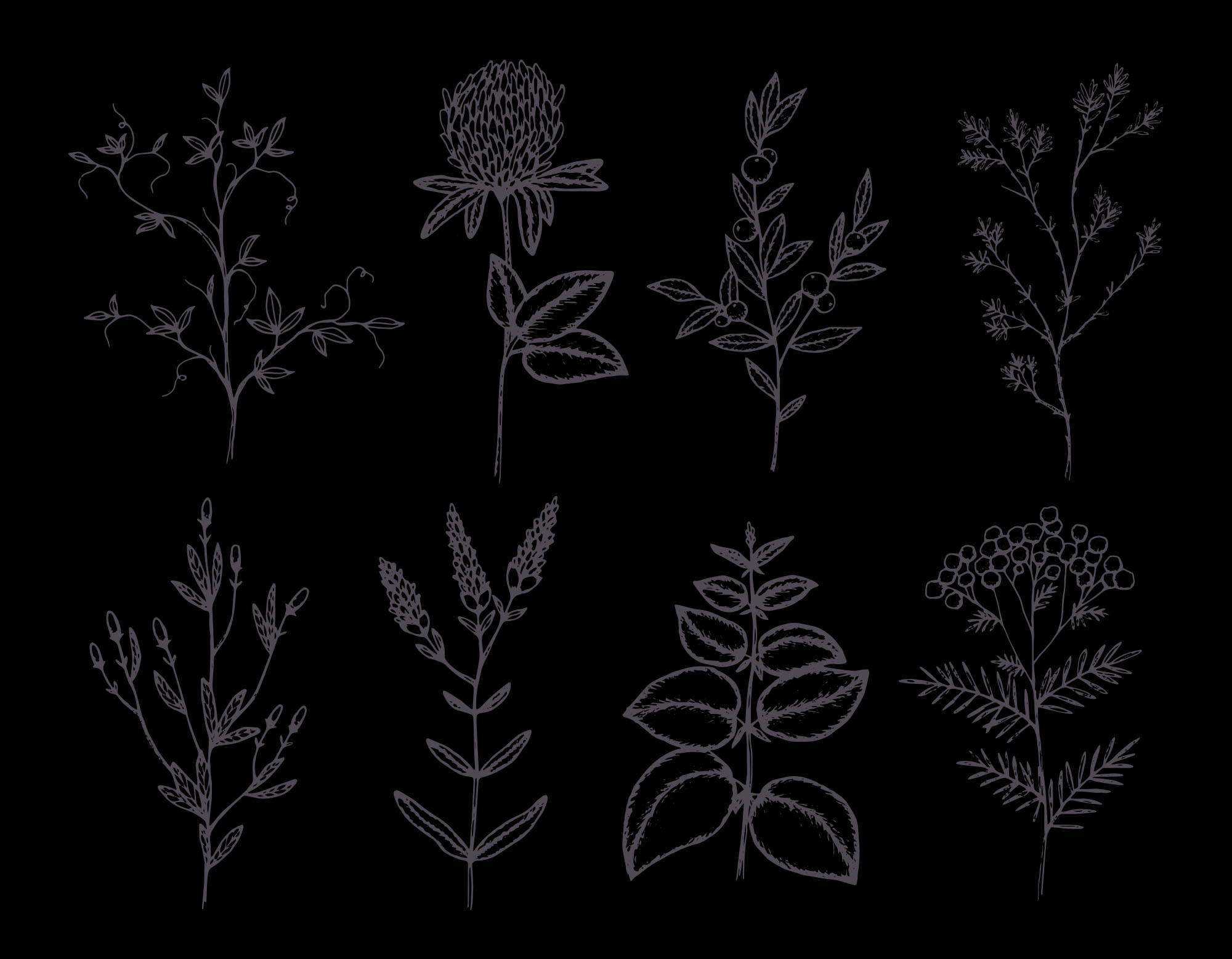 Herbs & Plants - Dark