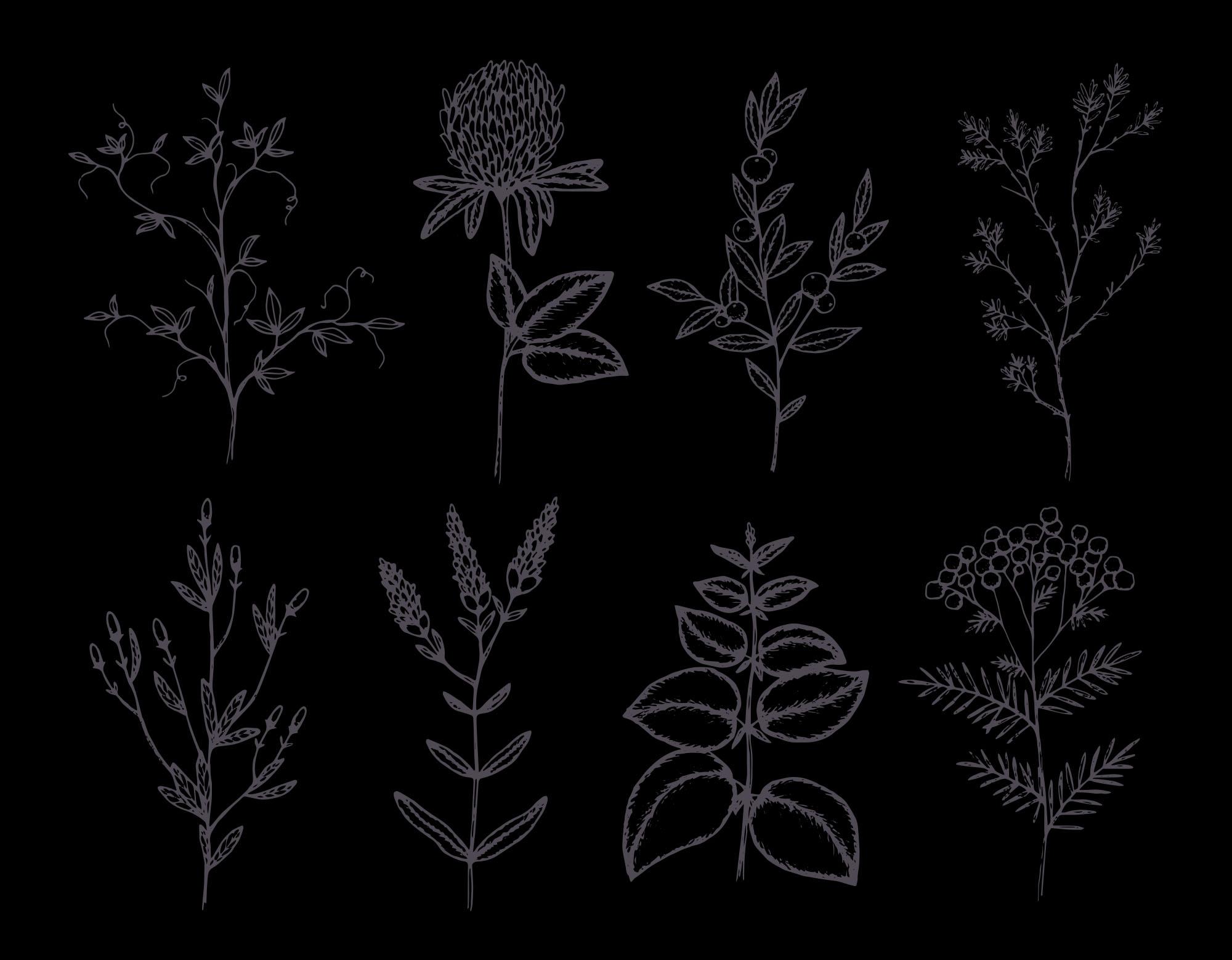 Herbs & Plants - Dark