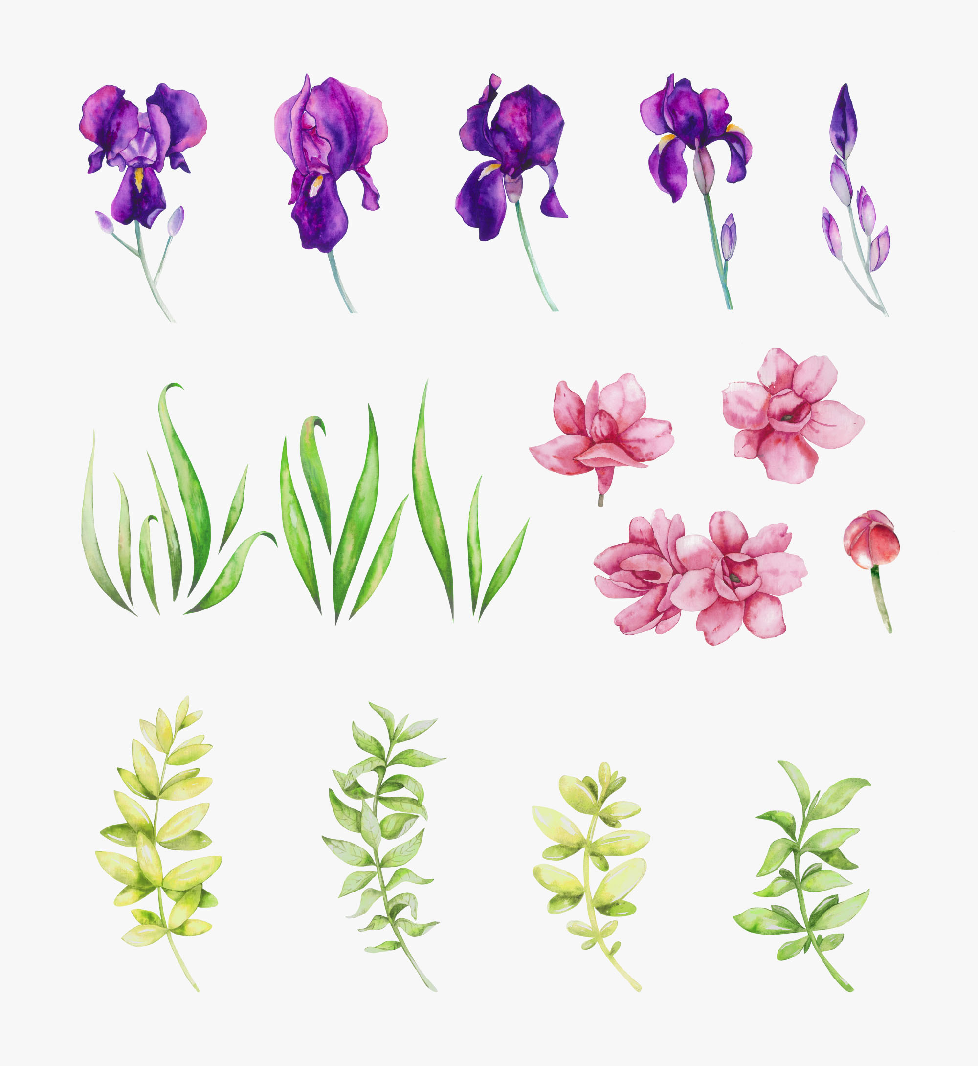 Iris Watercolor Floral Collection Elements